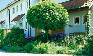 Hervorragend Hausbaum