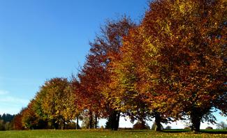 Wann ist Herbst?