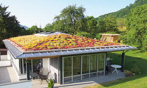 extensive dachbegruenung selbstde