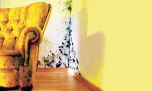 schimmel entfernen. Black Bedroom Furniture Sets. Home Design Ideas