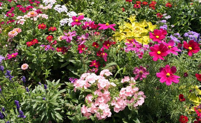 Etwas Neues genug Sommerblumen | selbst.de &XH_38