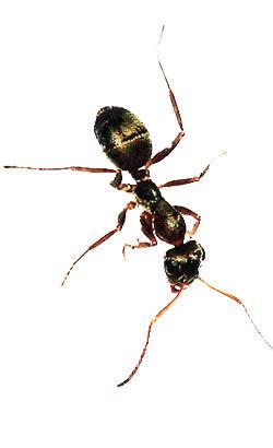Pflaster Ameisenschaden Beheben Selbst De