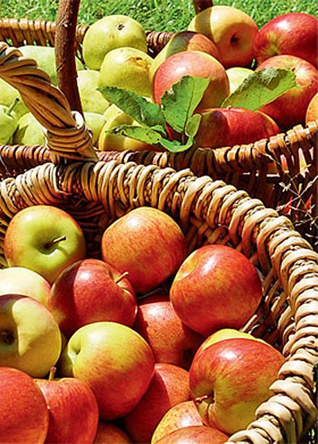 Apfelbaum Schneiden Selbst De
