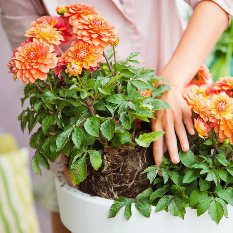 Balkonpflanzen for Halbschattige balkonpflanzen