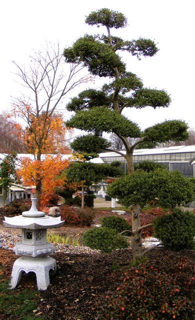 Japanischer Garten Selbstde
