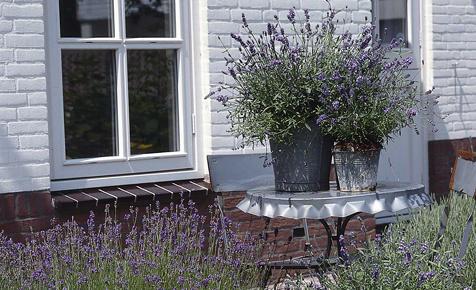 Sommer-Garten: Zwiebelblumen, Pflanzkübel & Sitzplätze   selbst.de