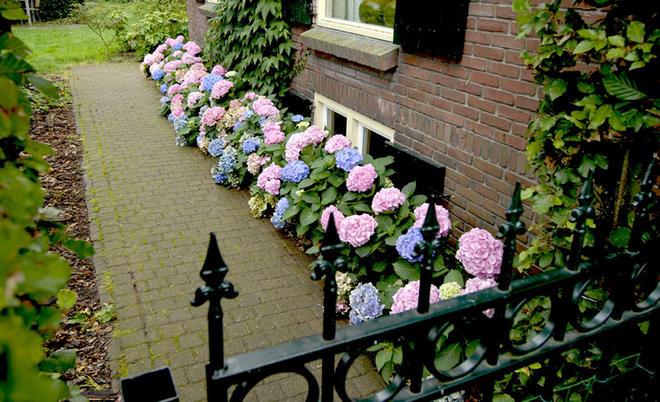 Top Hortensien pflanzen | selbst.de &LC_91