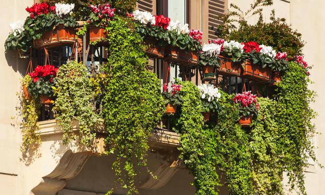 Balkonpflanzen halbschattig