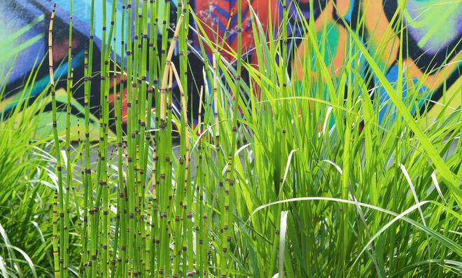 Bambus Anpflanzen Selbst De