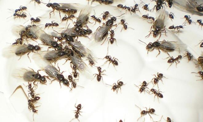 Berühmt Fliegende Ameisen | selbst.de #OF_49