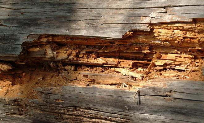 Stark beschädigtes Holz