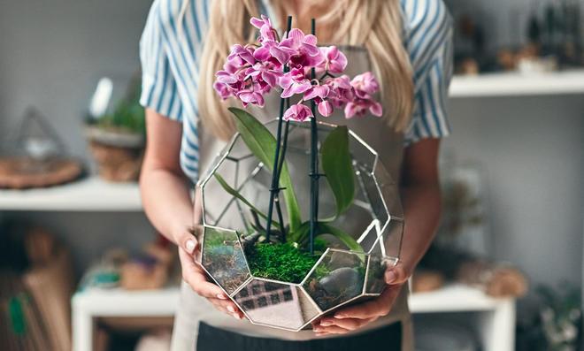 Orchidee Topf