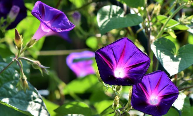 Blumen bestimmen