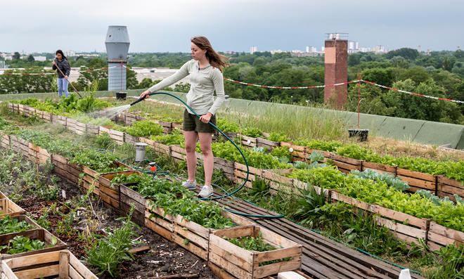 Selbstversorger-Garten auf dem Dach