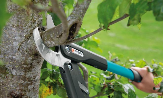 Obstbaumschnitt: Apfelbaum schneiden
