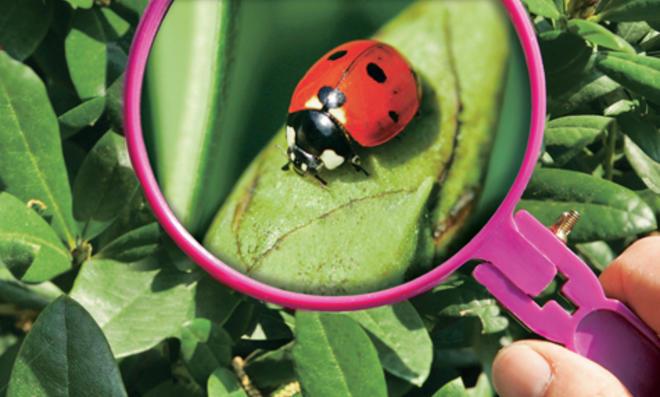 Biologischer Pflanzenschutz