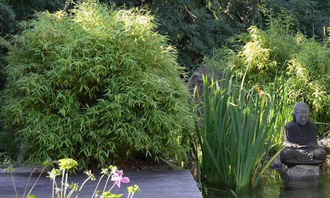 Prächtig Bambus pflanzen | selbst.de @YD_33