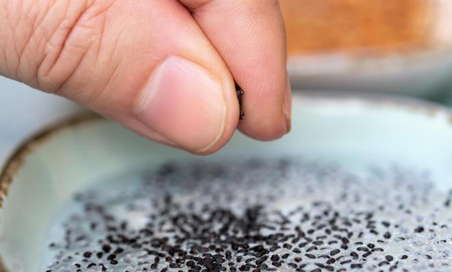 Basilikum kann mit 3 Methoden vermehrt werden.