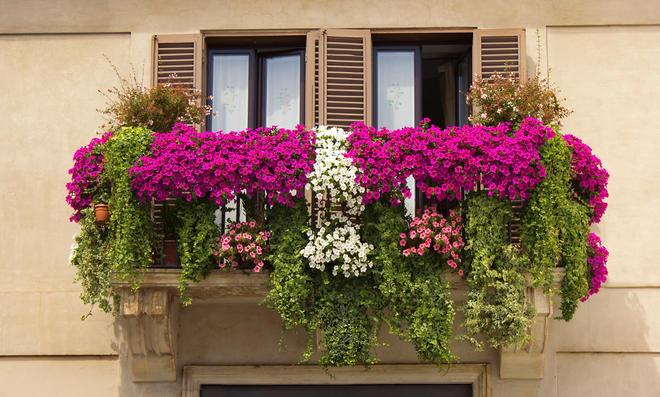 Balkonpflanzen sonnig