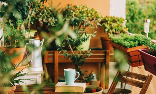 Balkonpflanzen pflegeleicht