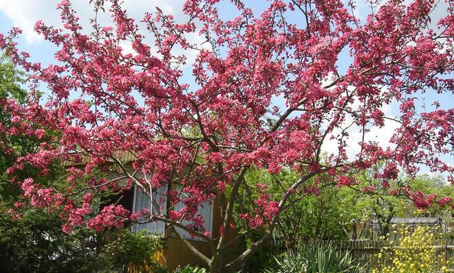 Baum im Garten