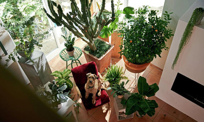 5 Pflanzenpflege-Fehler
