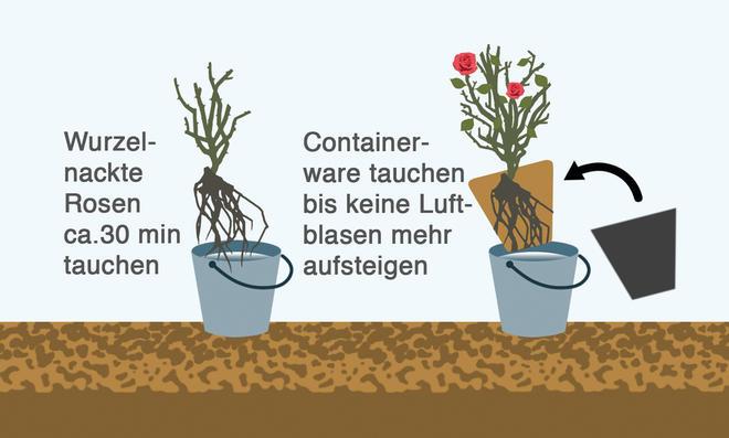 Fehler beim Anpflanzen