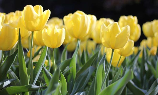 Frühlingsanfang Blumen