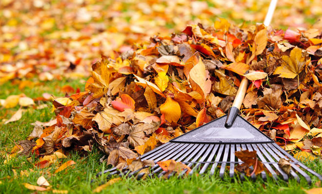 Streit ums Herbstlaub