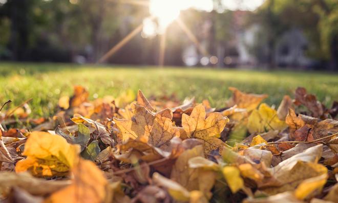 Herbstlaub sinnvoll nutzen