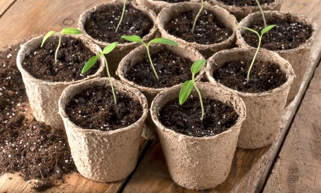 Jungpflanzen abhärten: Was heißt das?