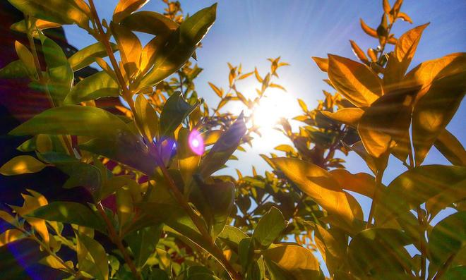 Pflanzen Sonnenbrand