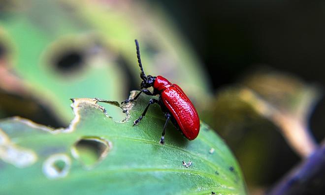 Schädlinge bestimmen und bekämpfen