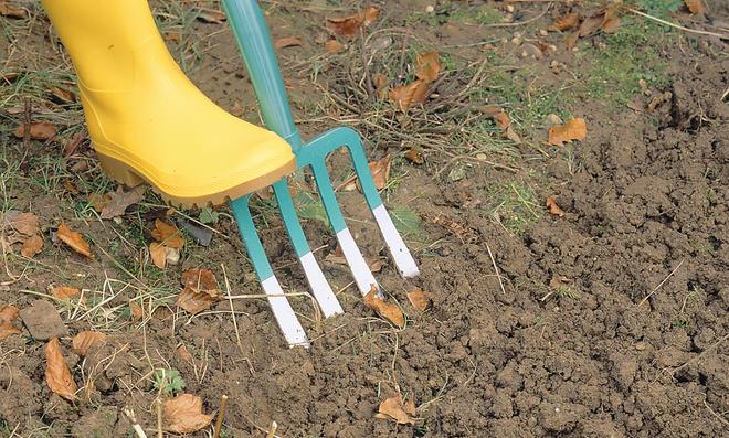 Schneckeneier ausgraben