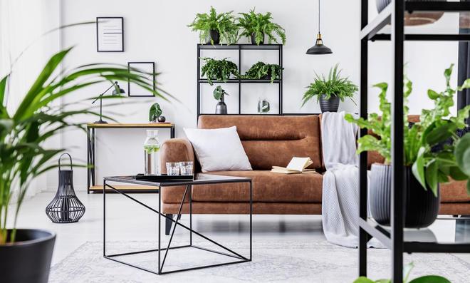 Diese Pflanzen braucht Ihre Urban Jungle Wohnung