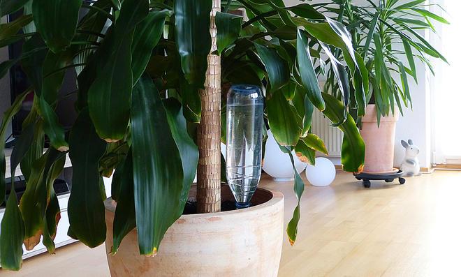 Wasserspeicher für Kübelpflanzen