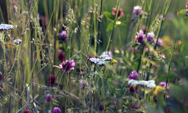 Wildblumenwiese mähen