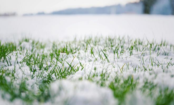 Das Betreten des Rasens sollten Sie im Winter vermeiden.