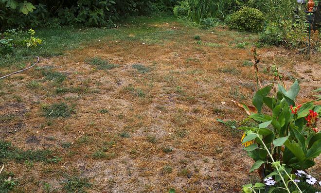 Droht auch 2019 die Ernte zu verdorren?