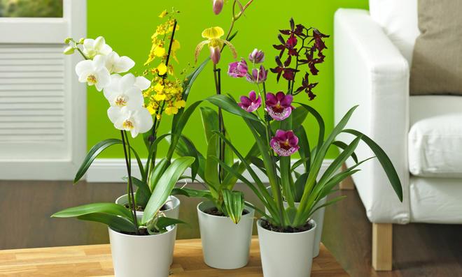 3 Tipps: Pflanzenbewässerung in der Urlaubszeit