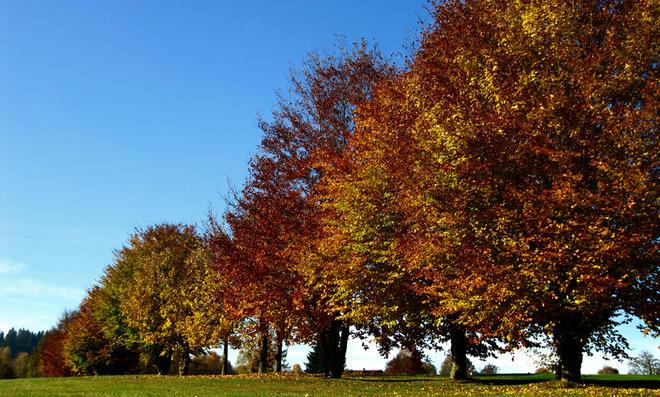 Herbstlaub: Chlorophyll und andere Blattfarbstoffe