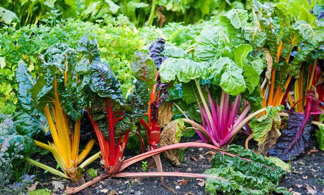 Salat und Kohl im Winter