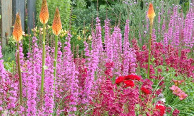 Sommer im Garten: Zwiebelblumen, Pflanzkübel und Sitzplätze