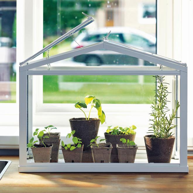 Mini-Gewächshaus bepflanzen
