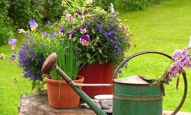 Pflanzenpflege: Pflegetipps für Gartenblumen