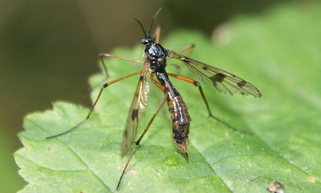 UV-Insektenfalle