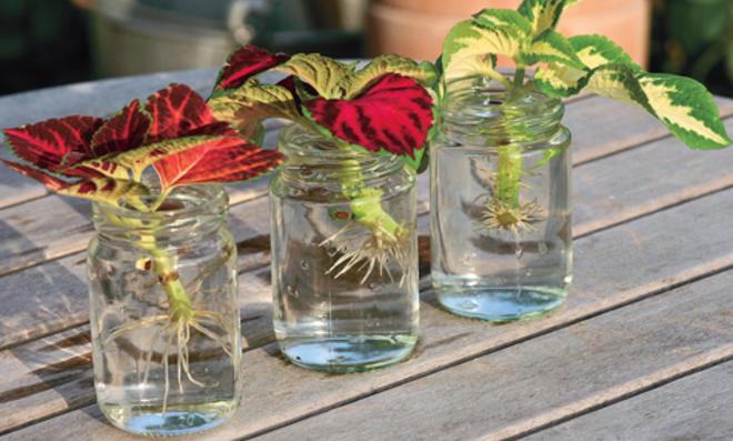 Stecklinge: Blumen züchten