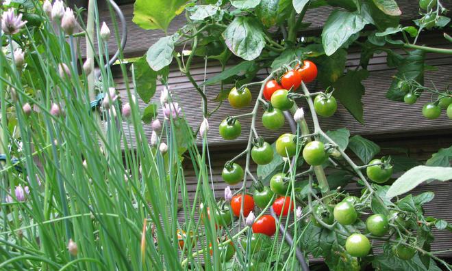 Gartenideen selbst de for Atemberaubende gartenideen