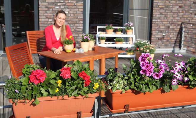 Balkonpflanzen für den Balkonkasten