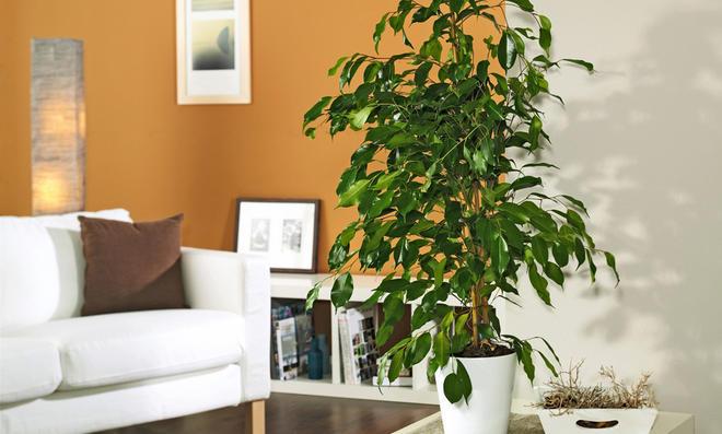 Zimmerpflanzen - Tolle zimmerpflanzen ...